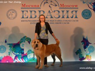 Евразия 2017 среднеазиатская овчарка